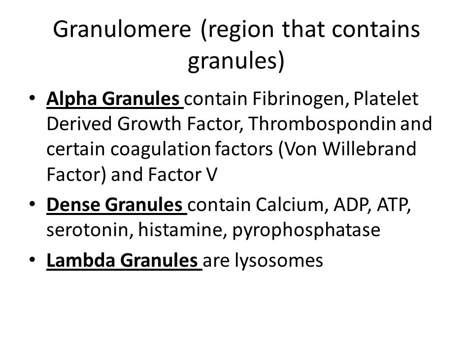 Granulomere (region that contains granules)