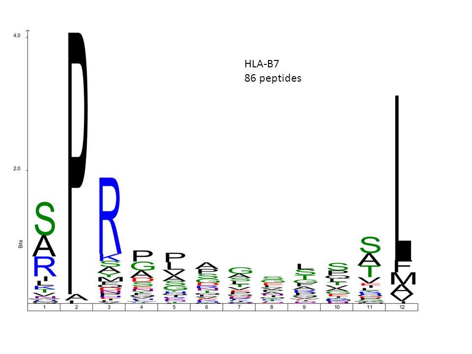 HLA-B7 86 peptides