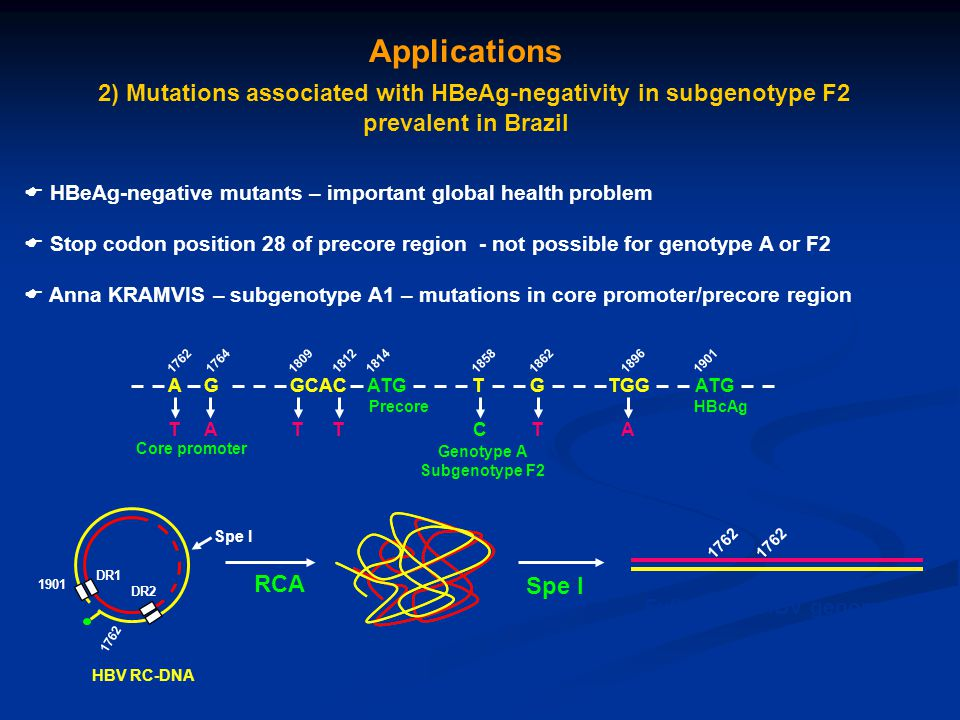 2) Mutations associated with HBeAg-negativity in subgenotype F2
