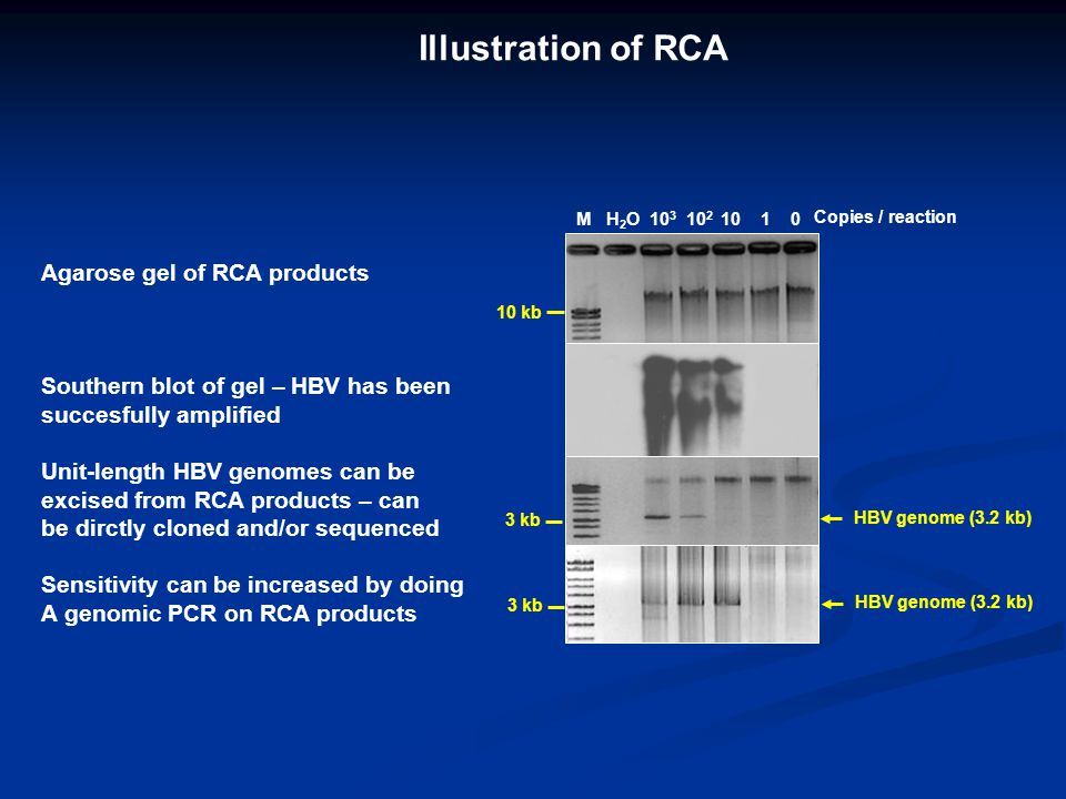 Illustration of RCA Agarose gel of RCA products