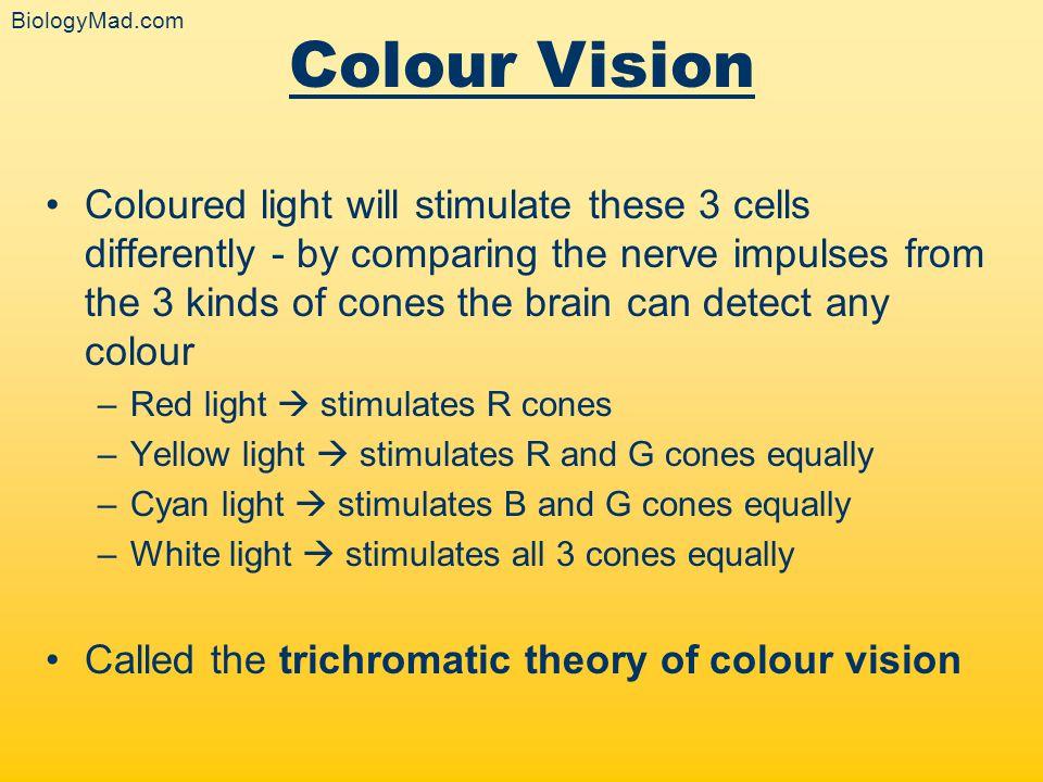 BiologyMad.com Colour Vision.