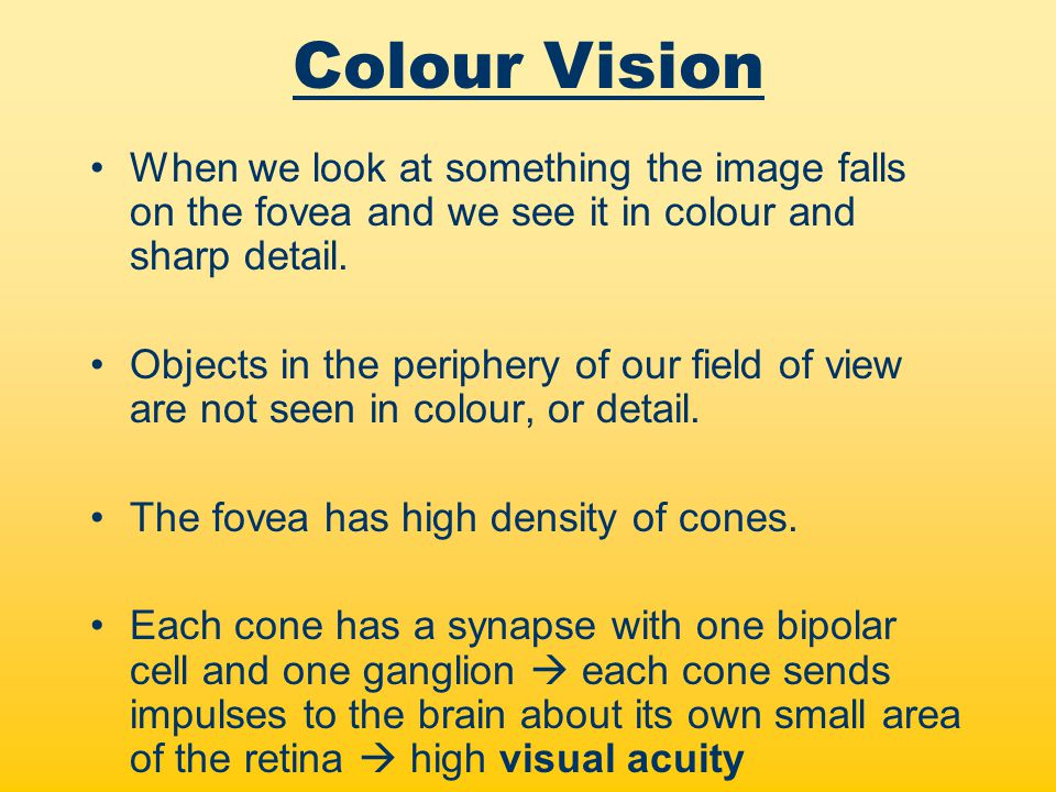 Colour Vision When we look at something the image falls on the fovea and we see it in colour and sharp detail.