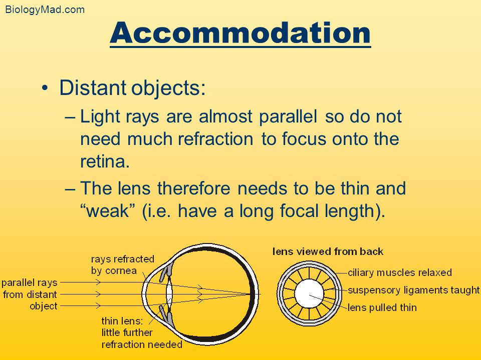 Accommodation Distant objects: