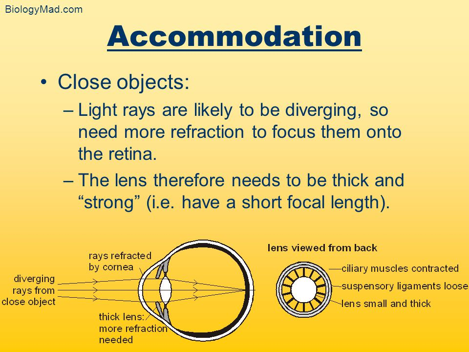 Accommodation Close objects: