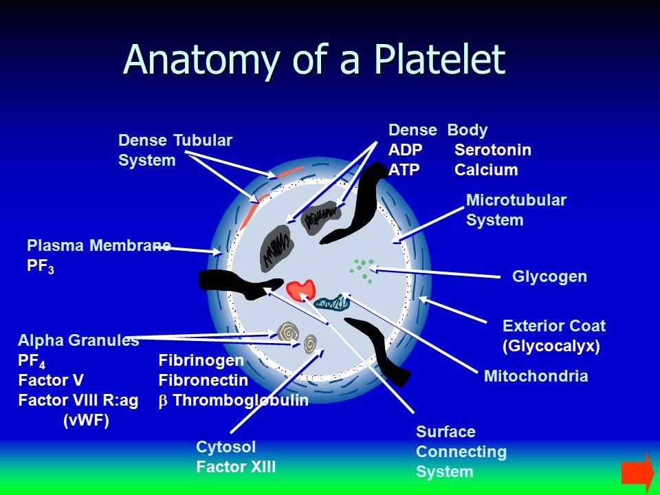 Anatomy of a Platelet Dense Body ADP Serotonin ATP Calcium