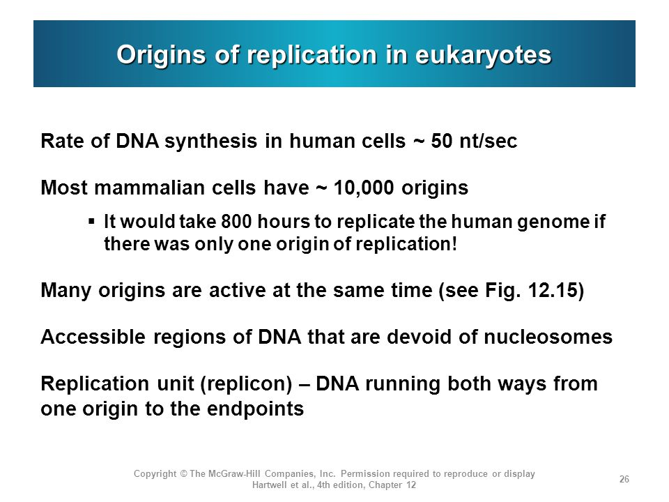 Origins of replication in eukaryotes