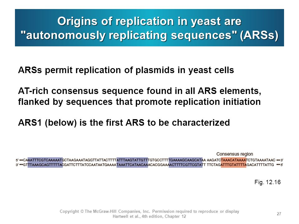 Origins of replication in yeast are autonomously replicating sequences (ARSs)