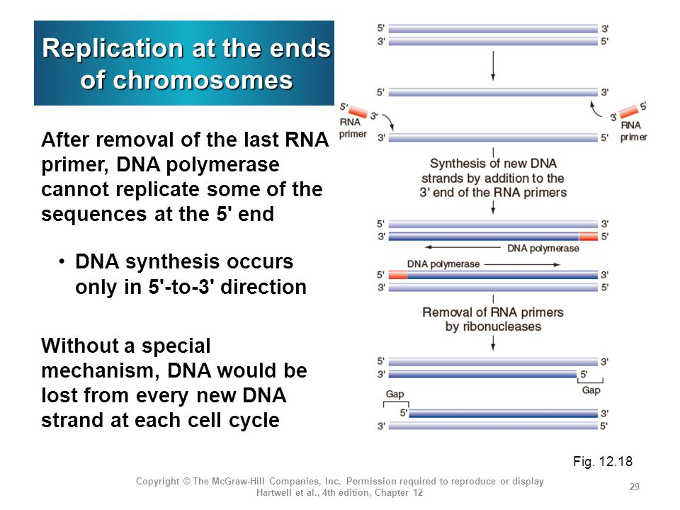 Replication at the ends of chromosomes