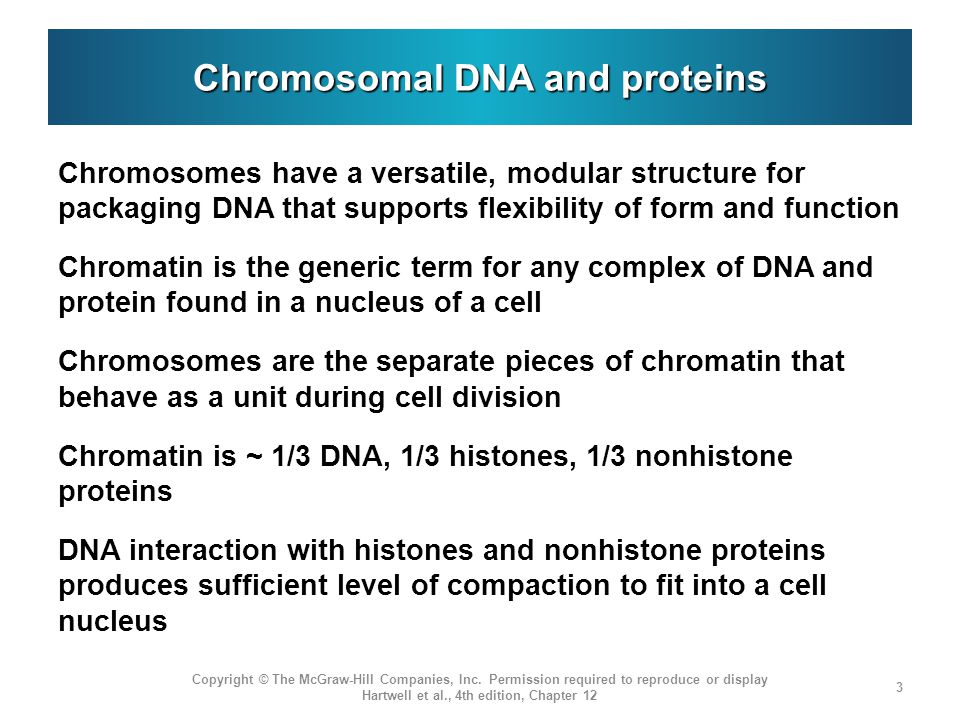 Chromosomal DNA and proteins