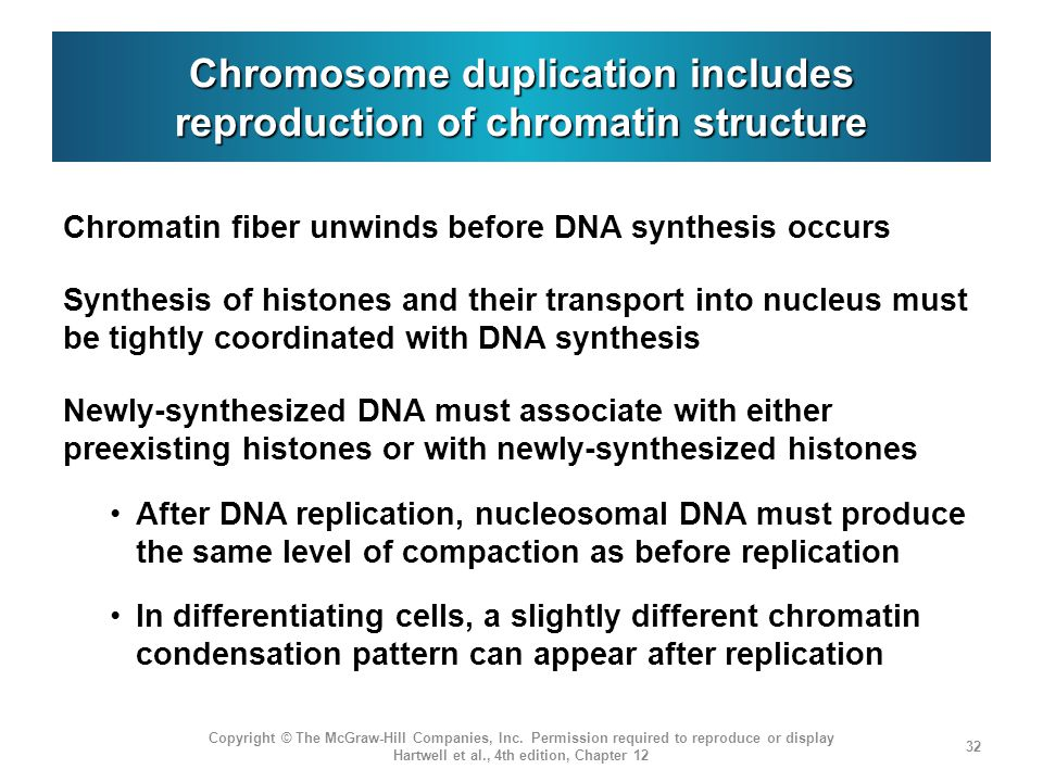 Chromosome duplication includes reproduction of chromatin structure