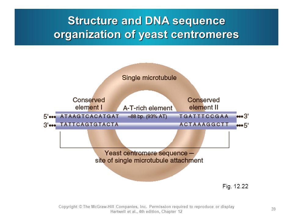 Structure and DNA sequence organization of yeast centromeres