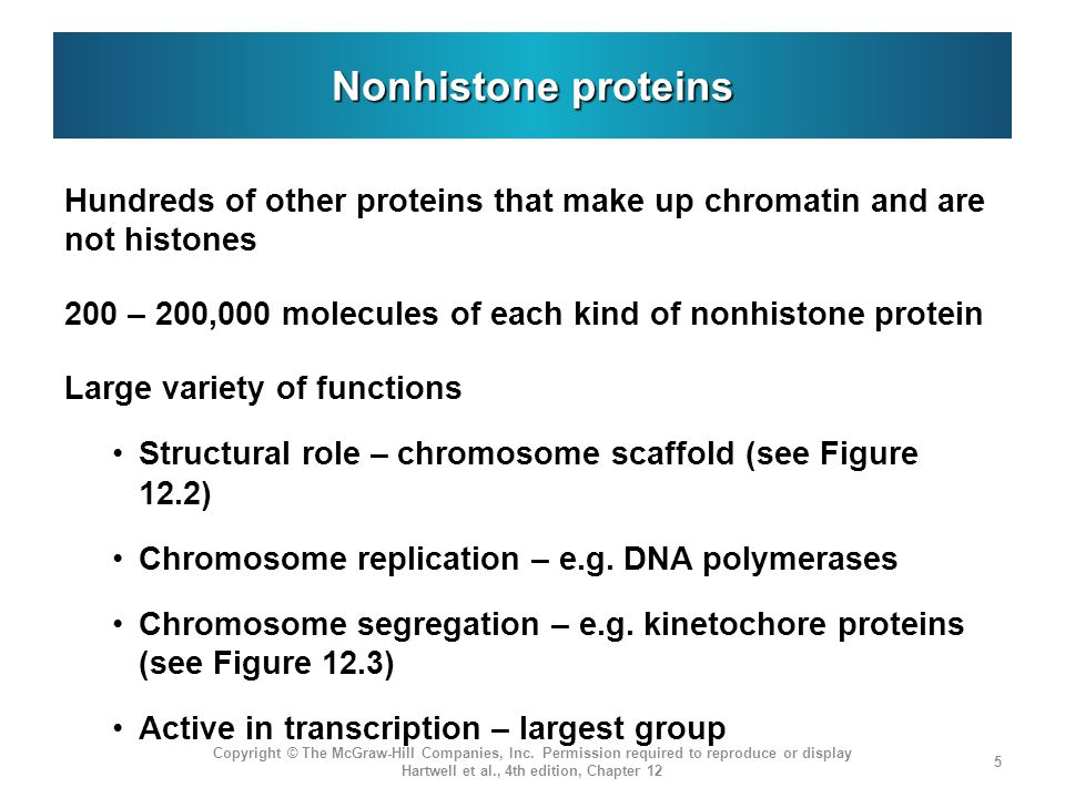 Nonhistone proteins Hundreds of other proteins that make up chromatin and are not histones.