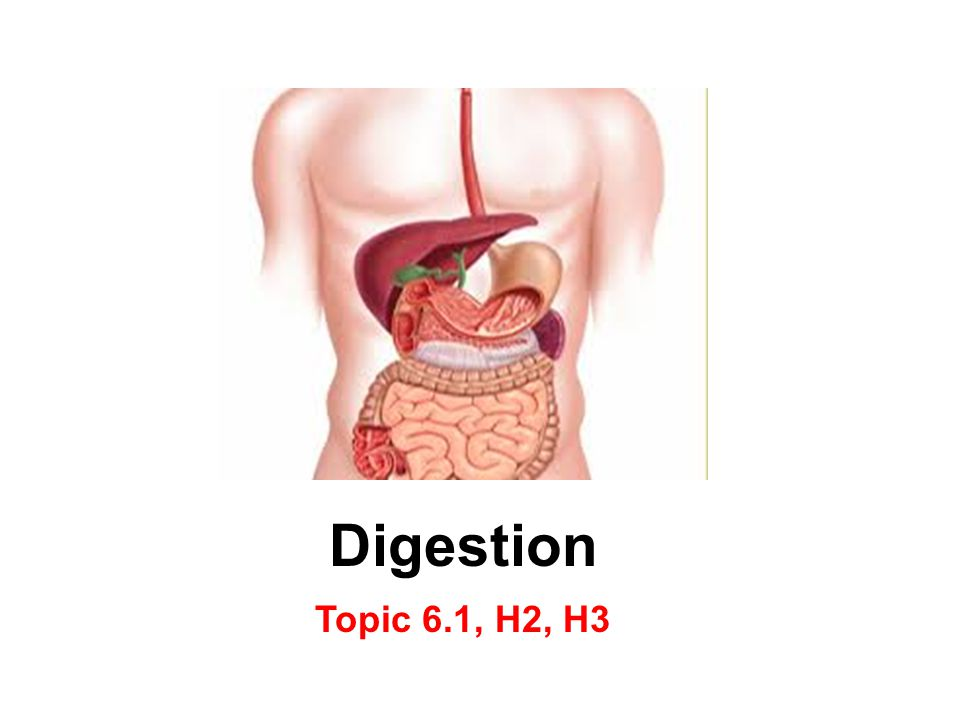 Digestion Topic 6.1, H2, H3
