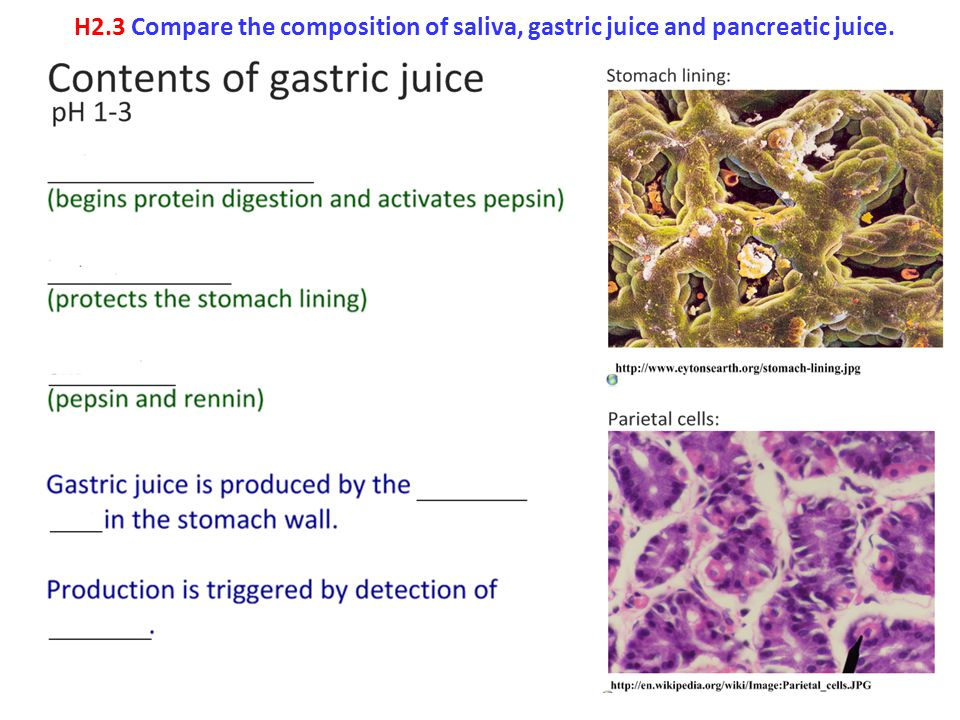 H2.3 Compare the composition of saliva, gastric juice and pancreatic juice.