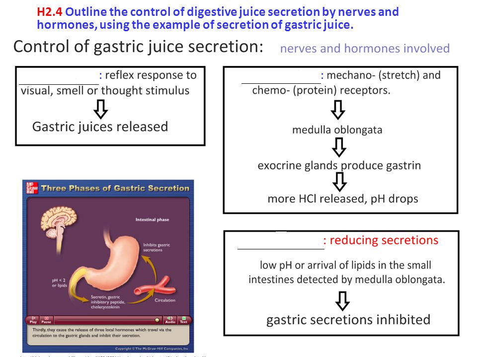 H2.4 Outline the control of digestive juice secretion by nerves and hormones, using the example of secretion of gastric juice.