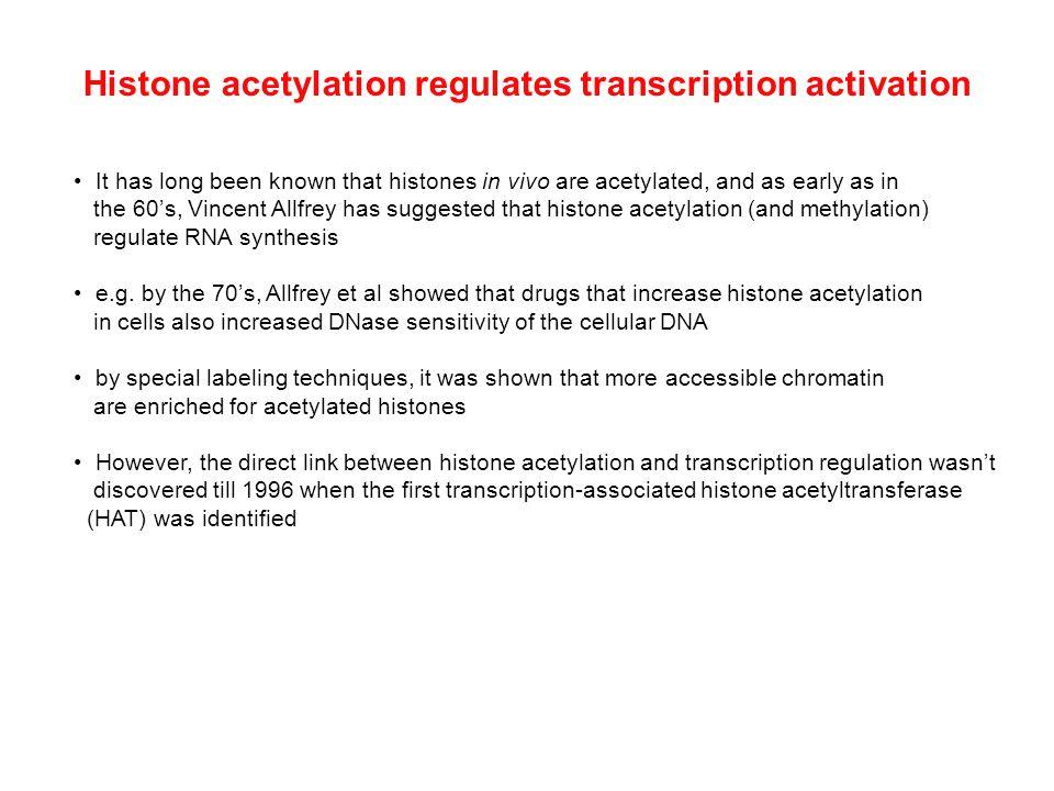 Histone acetylation regulates transcription activation