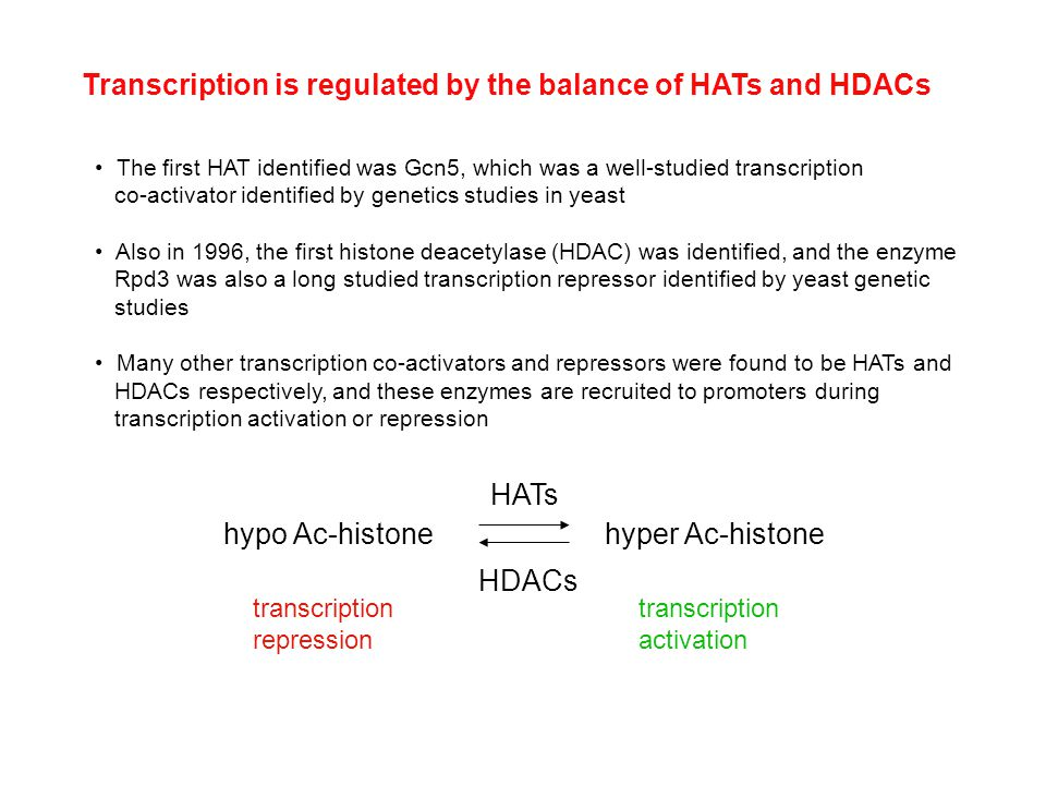 Transcription is regulated by the balance of HATs and HDACs