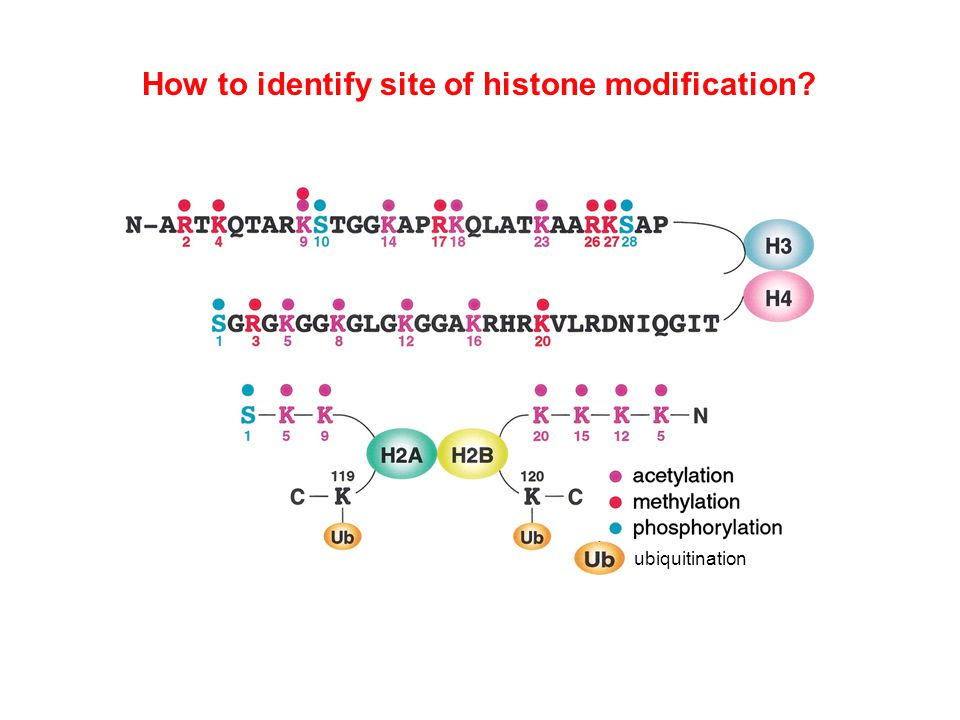 How to identify site of histone modification