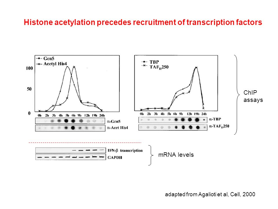Histone acetylation precedes recruitment of transcription factors