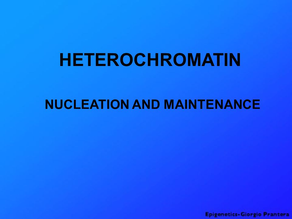 NUCLEATION AND MAINTENANCE