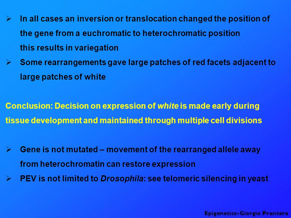 In all cases an inversion or translocation changed the position of