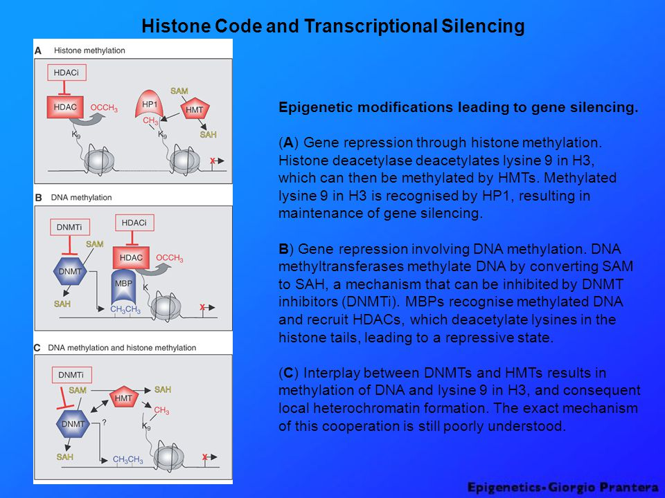 Histone Code and Transcriptional Silencing