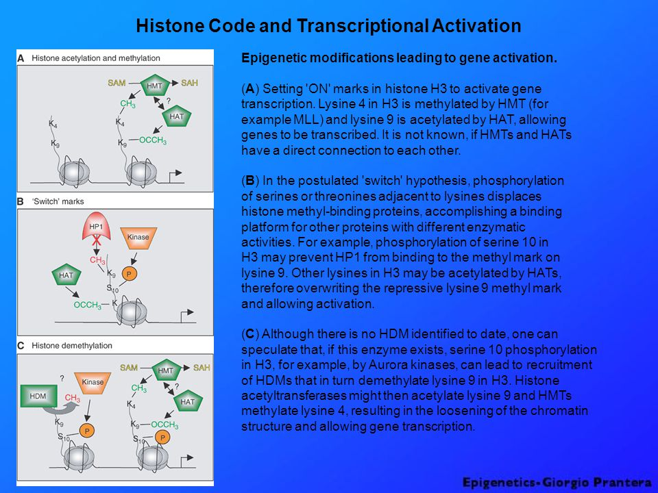 Histone Code and Transcriptional Activation