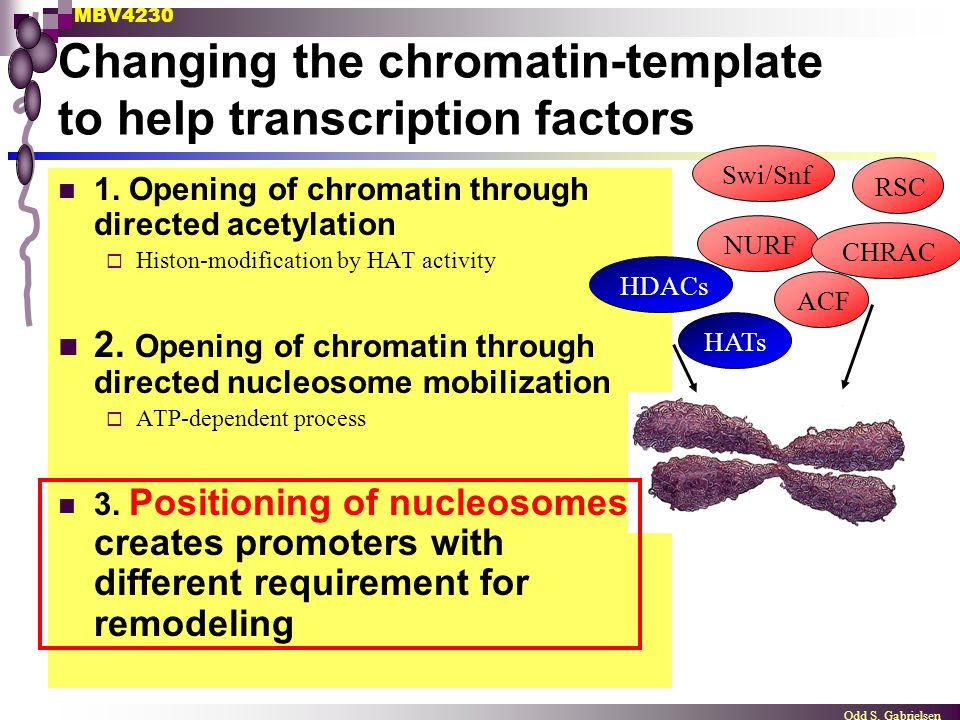 Changing the chromatin-template to help transcription factors