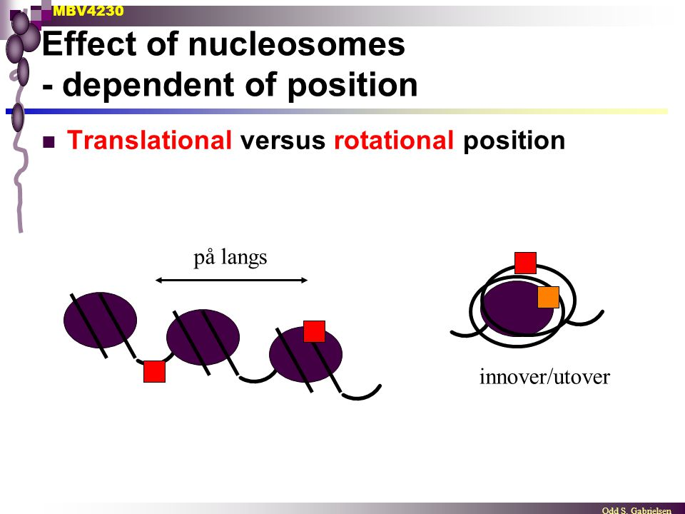 Effect of nucleosomes - dependent of position