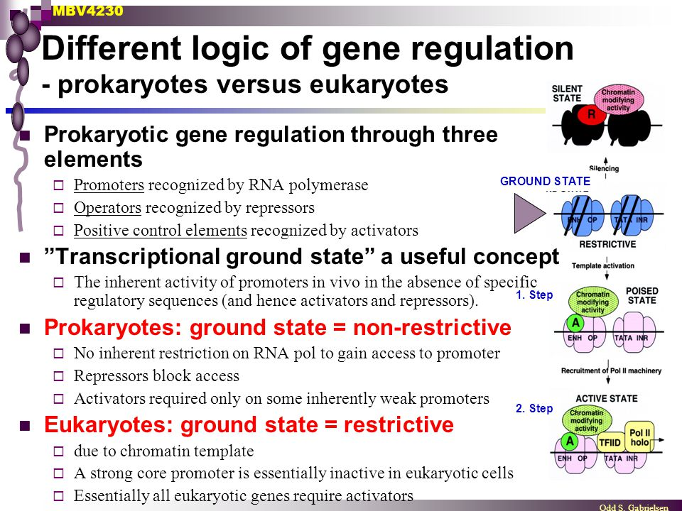 Different logic of gene regulation - prokaryotes versus eukaryotes
