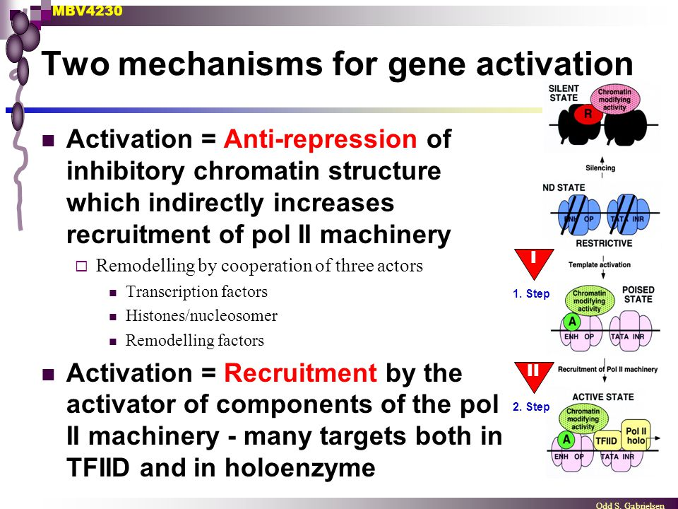 Two mechanisms for gene activation