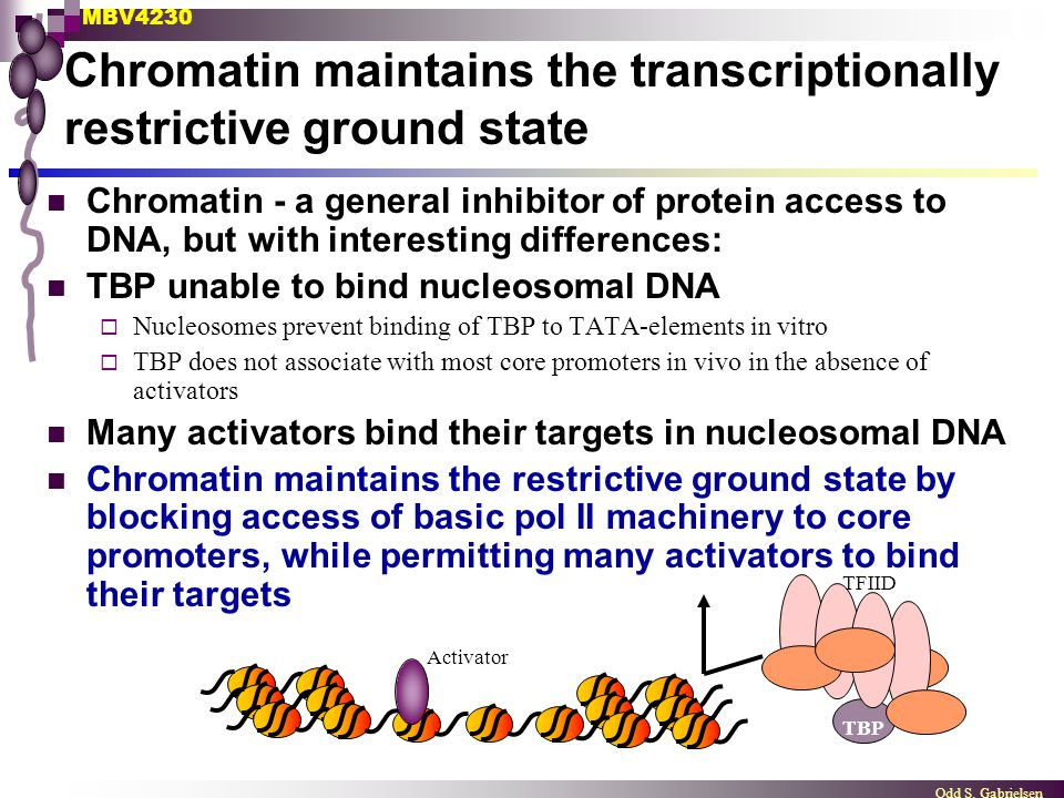 Chromatin maintains the transcriptionally restrictive ground state