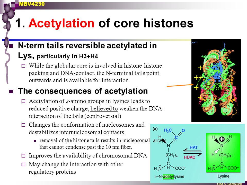 1. Acetylation of core histones