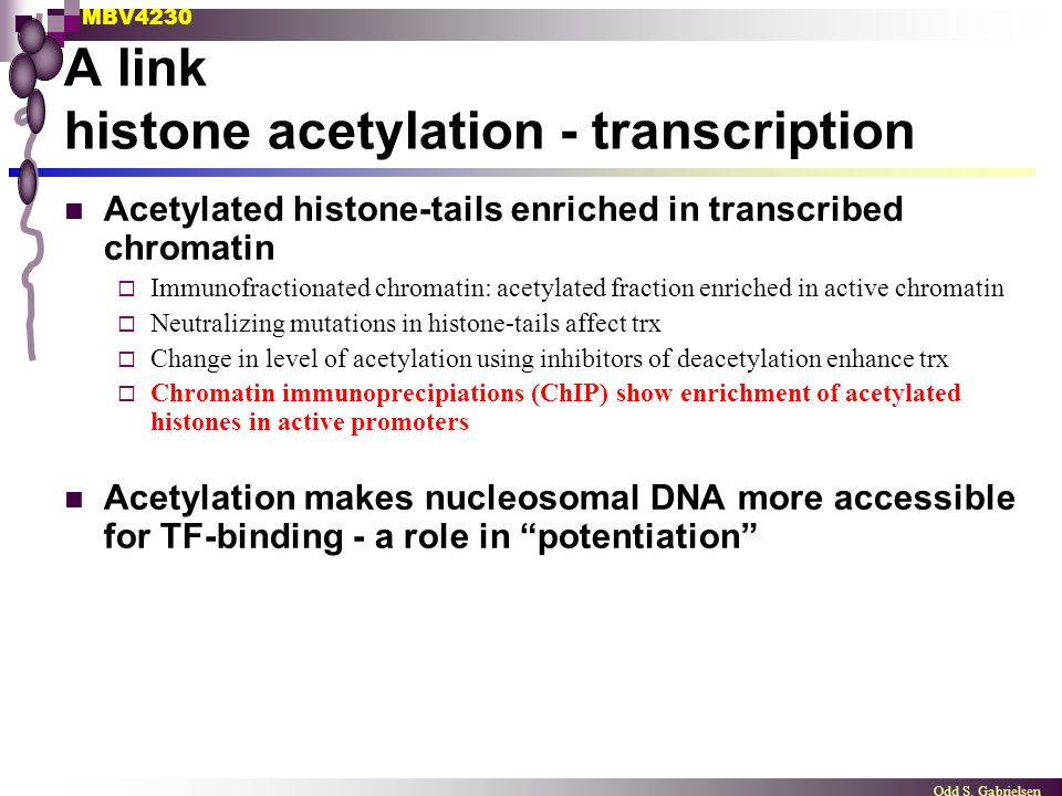 A link histone acetylation - transcription