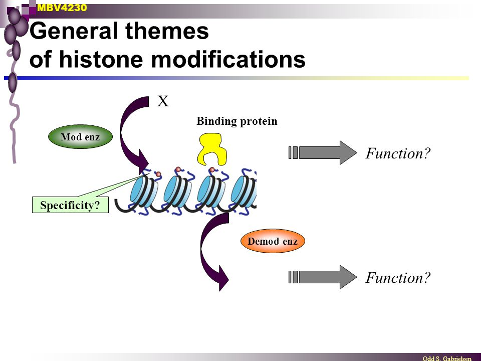 General themes of histone modifications