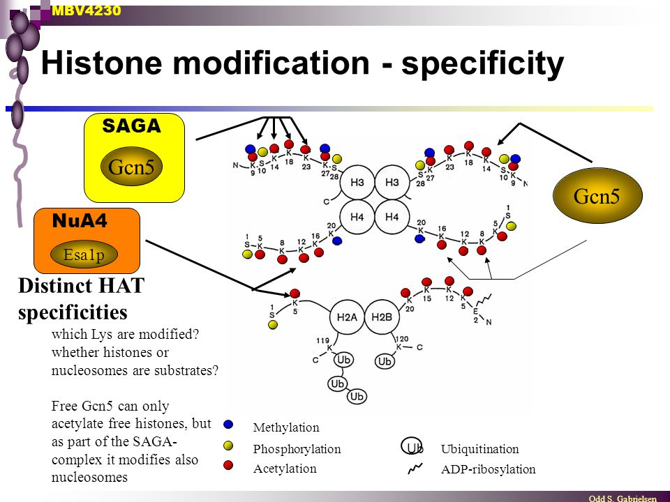 Histone modification - specificity
