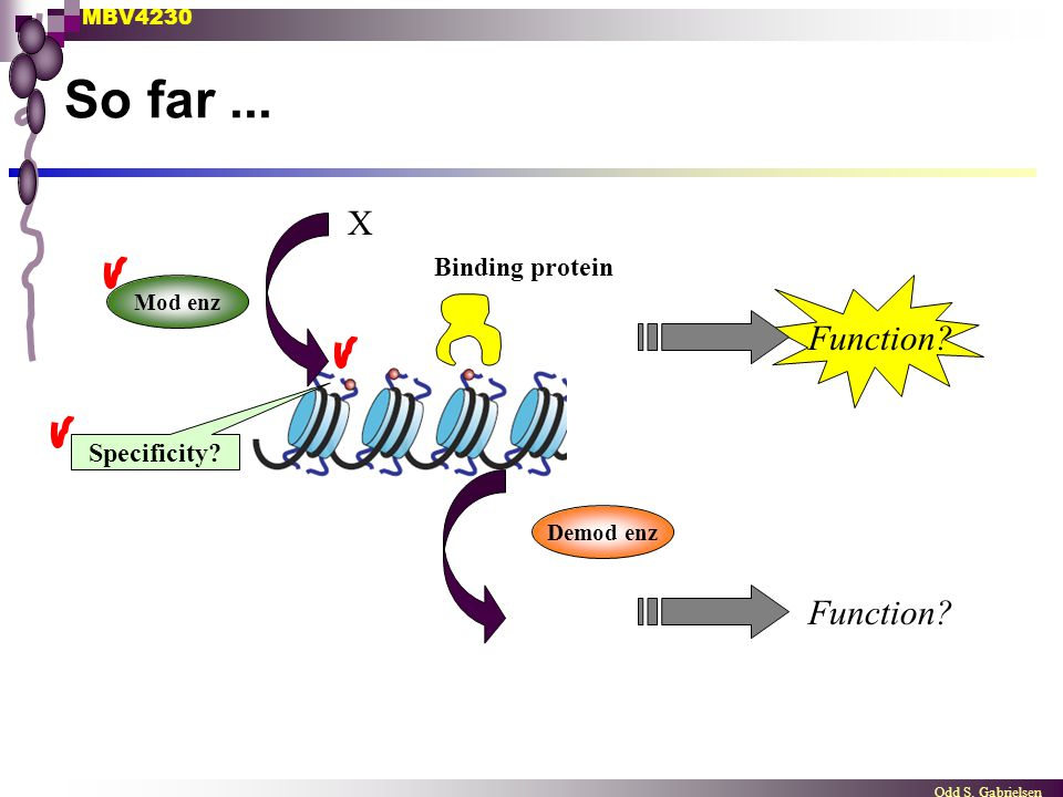 So far ... X Function Function Binding protein Specificity Mod enz