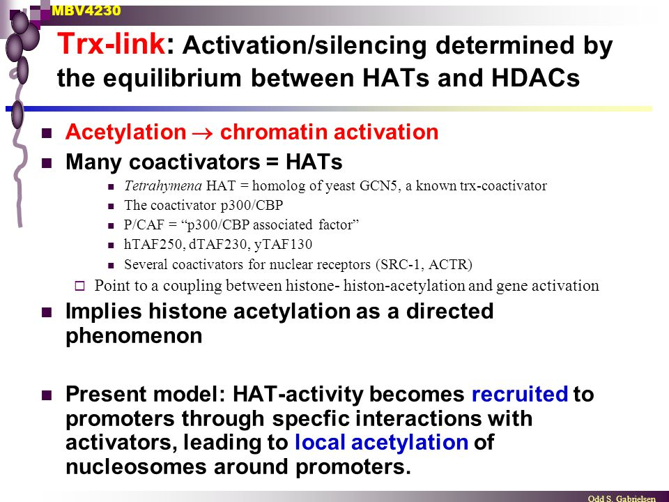 Trx-link: Activation/silencing determined by the equilibrium between HATs and HDACs