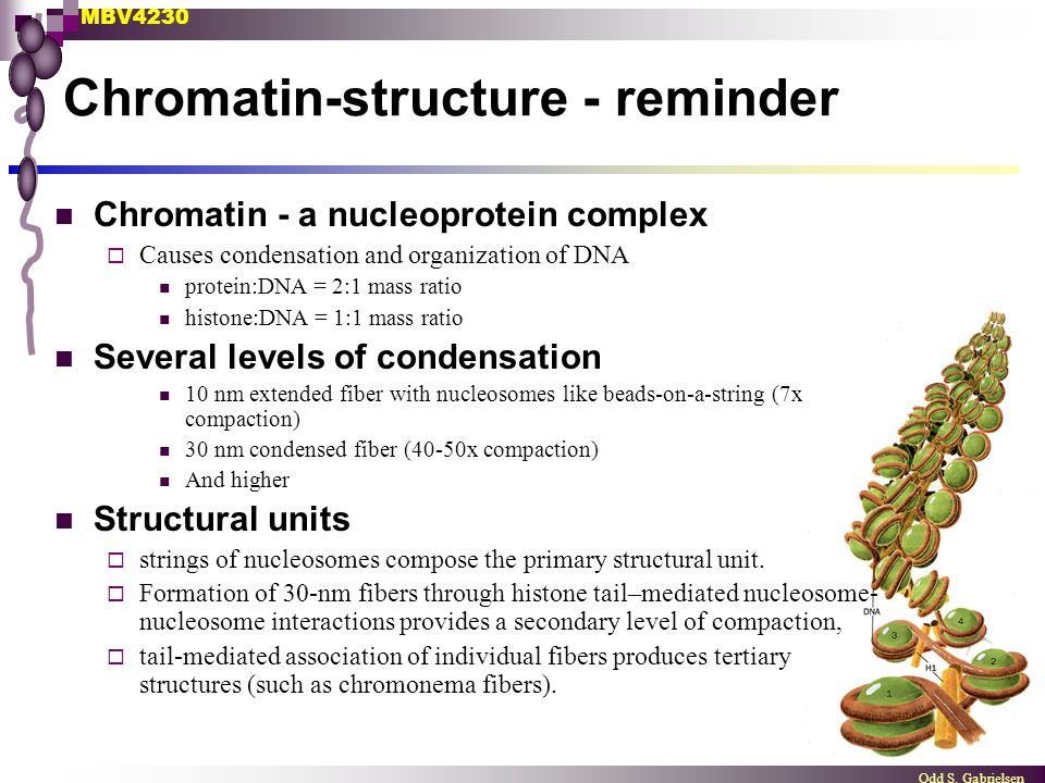 Chromatin-structure - reminder