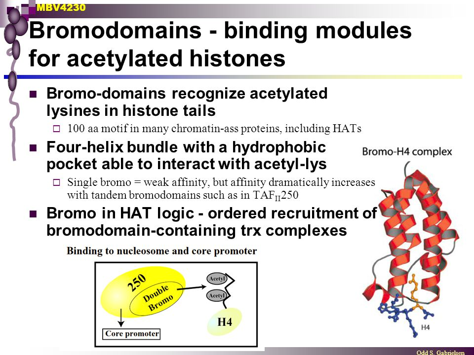 Bromodomains - binding modules for acetylated histones