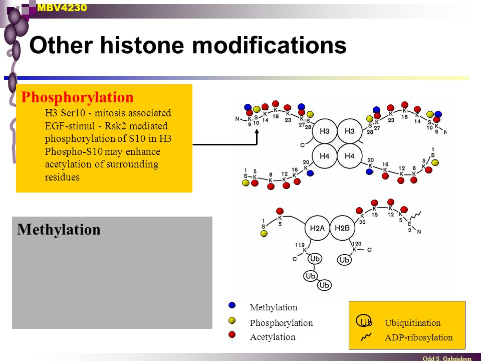 Other histone modifications