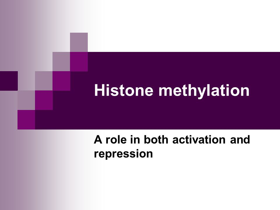 A role in both activation and repression
