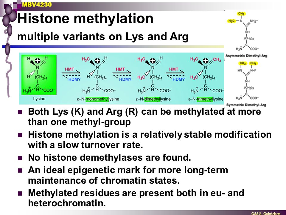 Histone methylation multiple variants on Lys and Arg