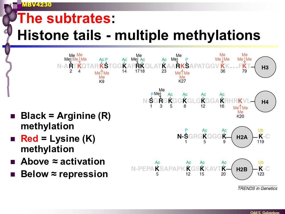 The subtrates: Histone tails - multiple methylations