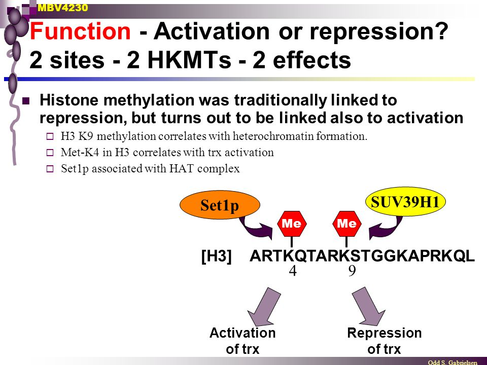 Function - Activation or repression 2 sites - 2 HKMTs - 2 effects