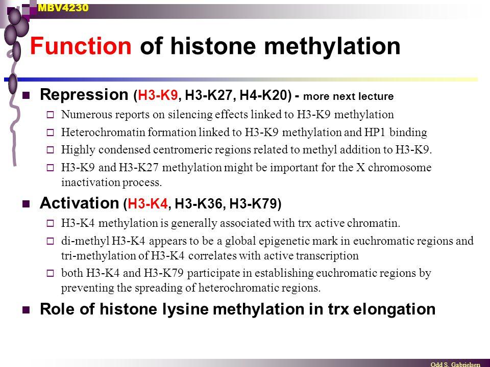 Function of histone methylation