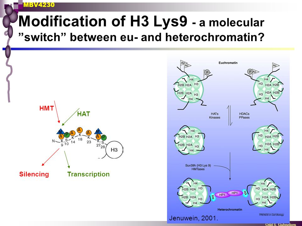 Modification of H3 Lys9 - a molecular switch between eu- and heterochromatin