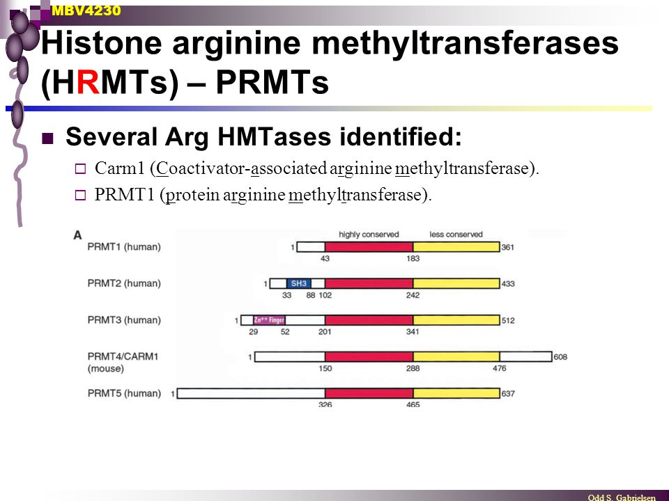 Histone arginine methyltransferases (HRMTs) – PRMTs