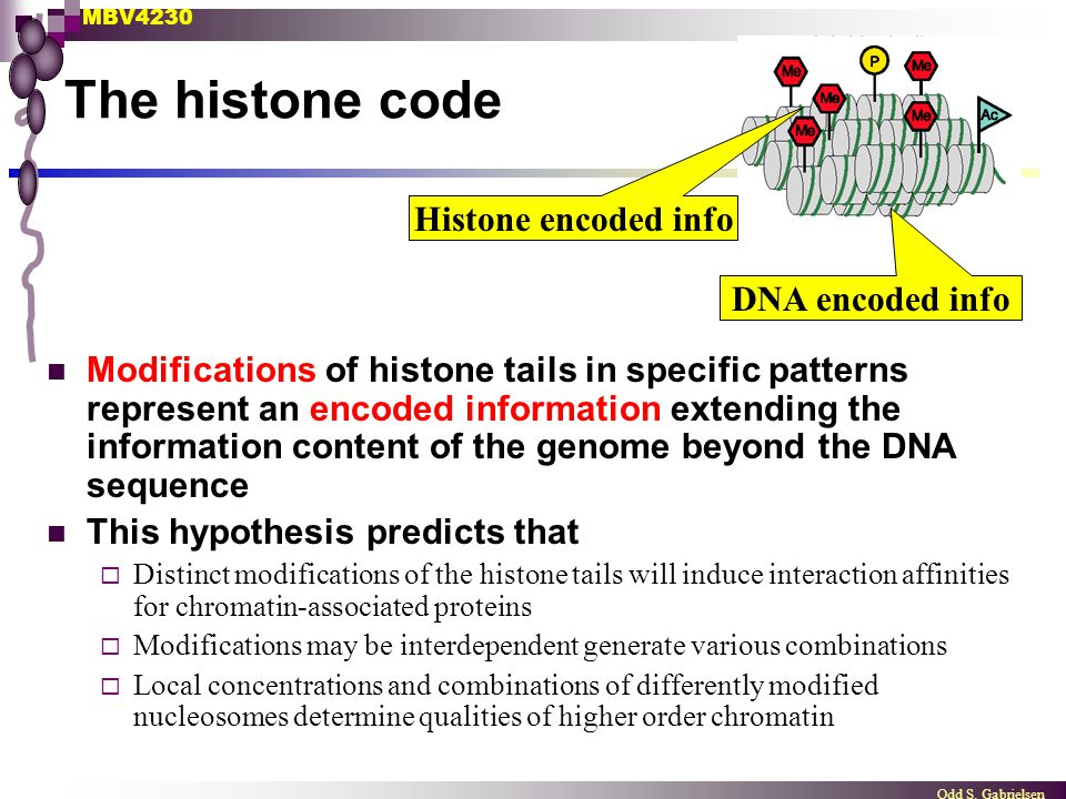 The histone code Histone encoded info DNA encoded info