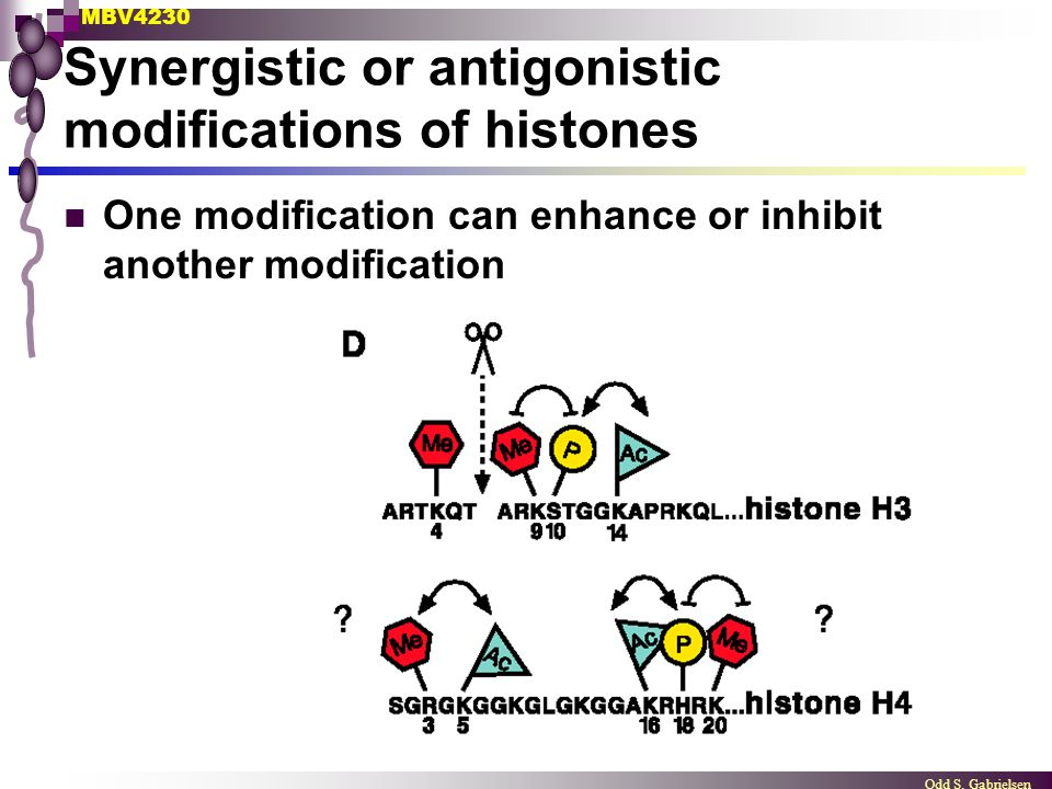 Synergistic or antigonistic modifications of histones